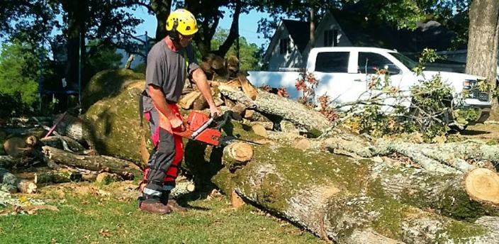 Parkes Tree Removal
