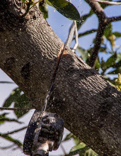 Tree Pruning Parkes
